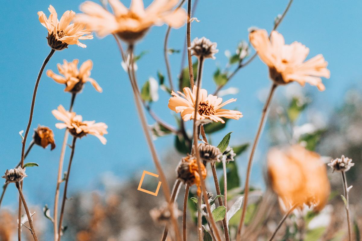 orange_flowers_blog_banner