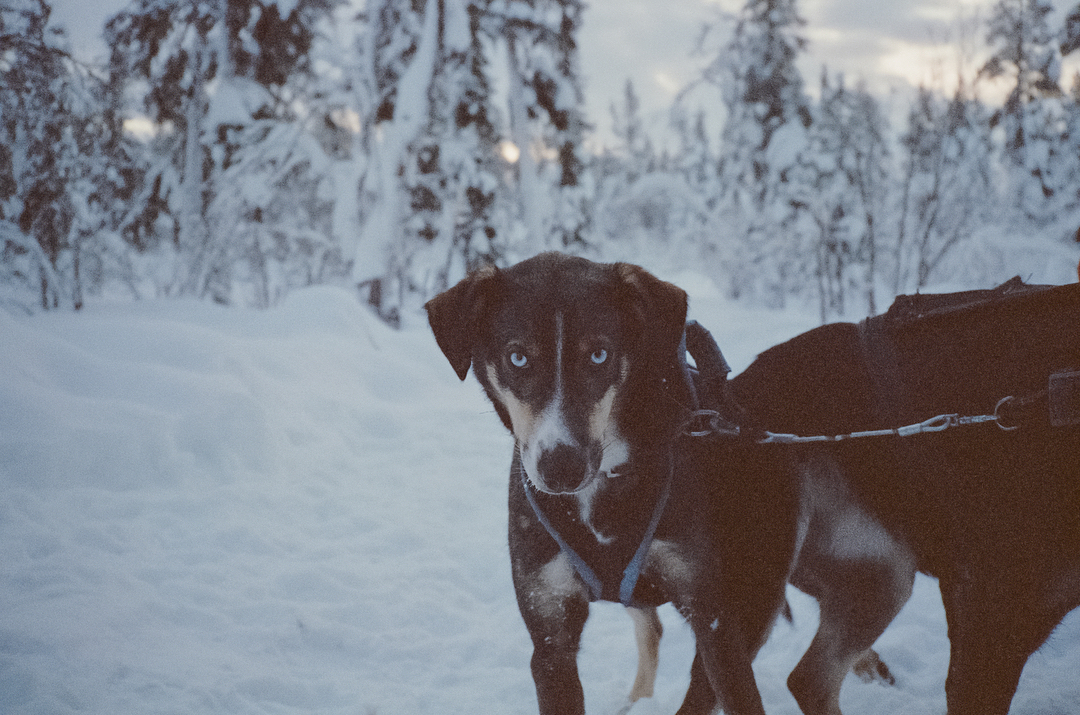 A_Dog_Against_Snowy_Background