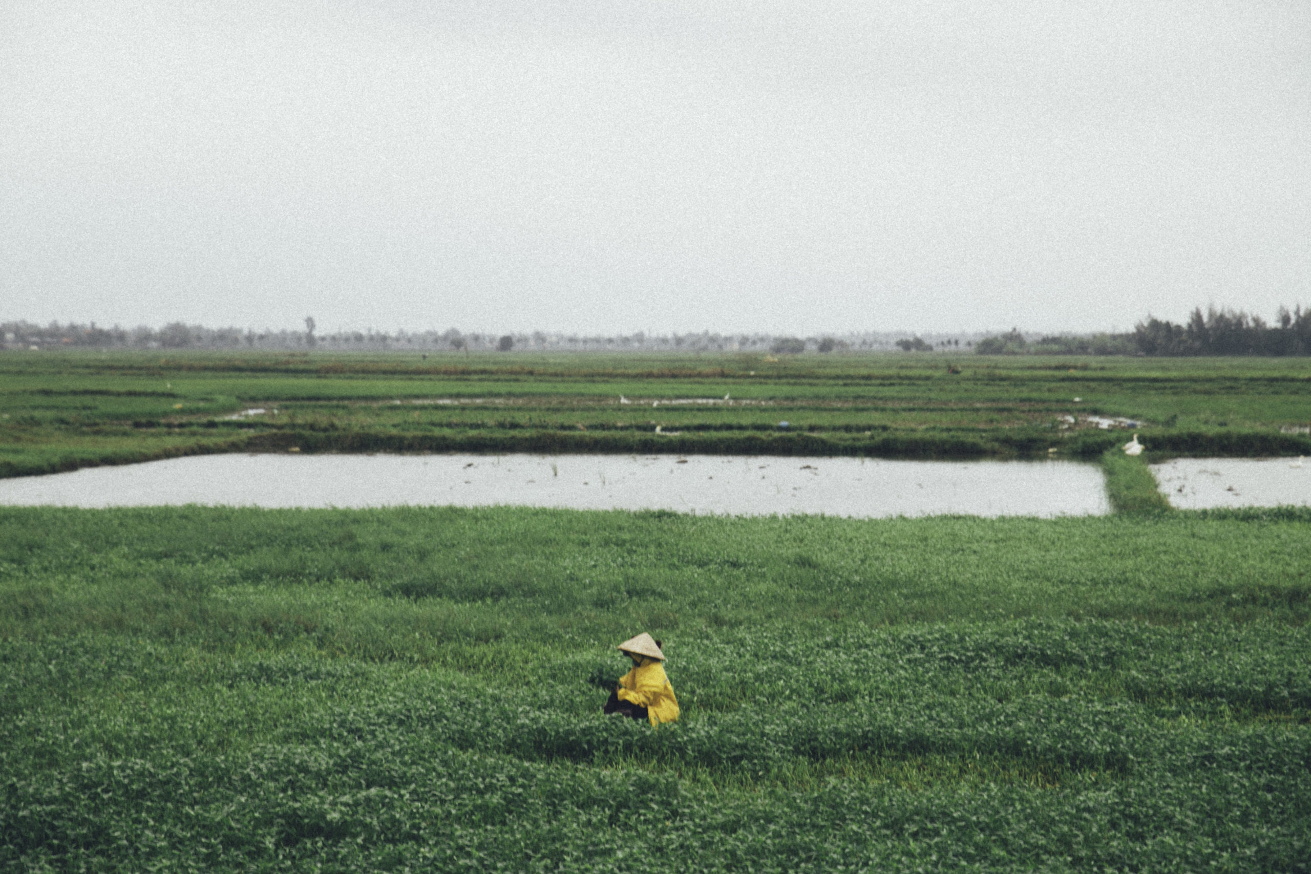 green_marsh _land_with_person _in_centre